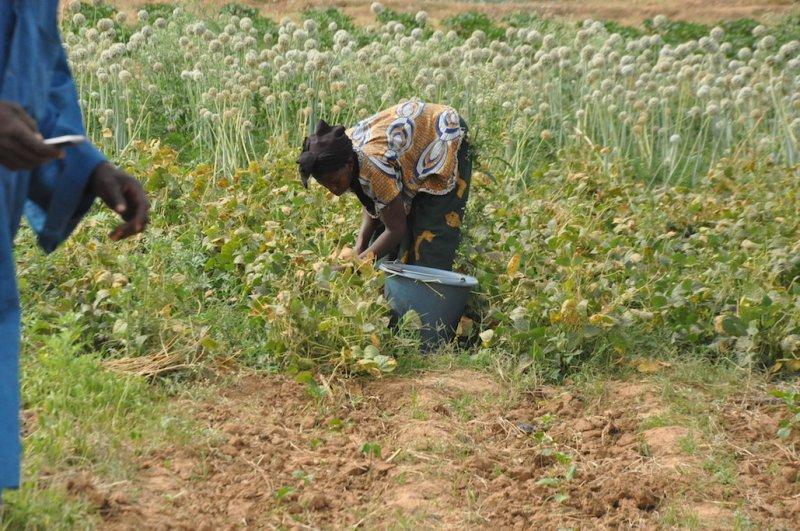 Mesures de lutte contre la Covid-19 au Burkina Faso : Des exploitants agricoles dans la précarité
